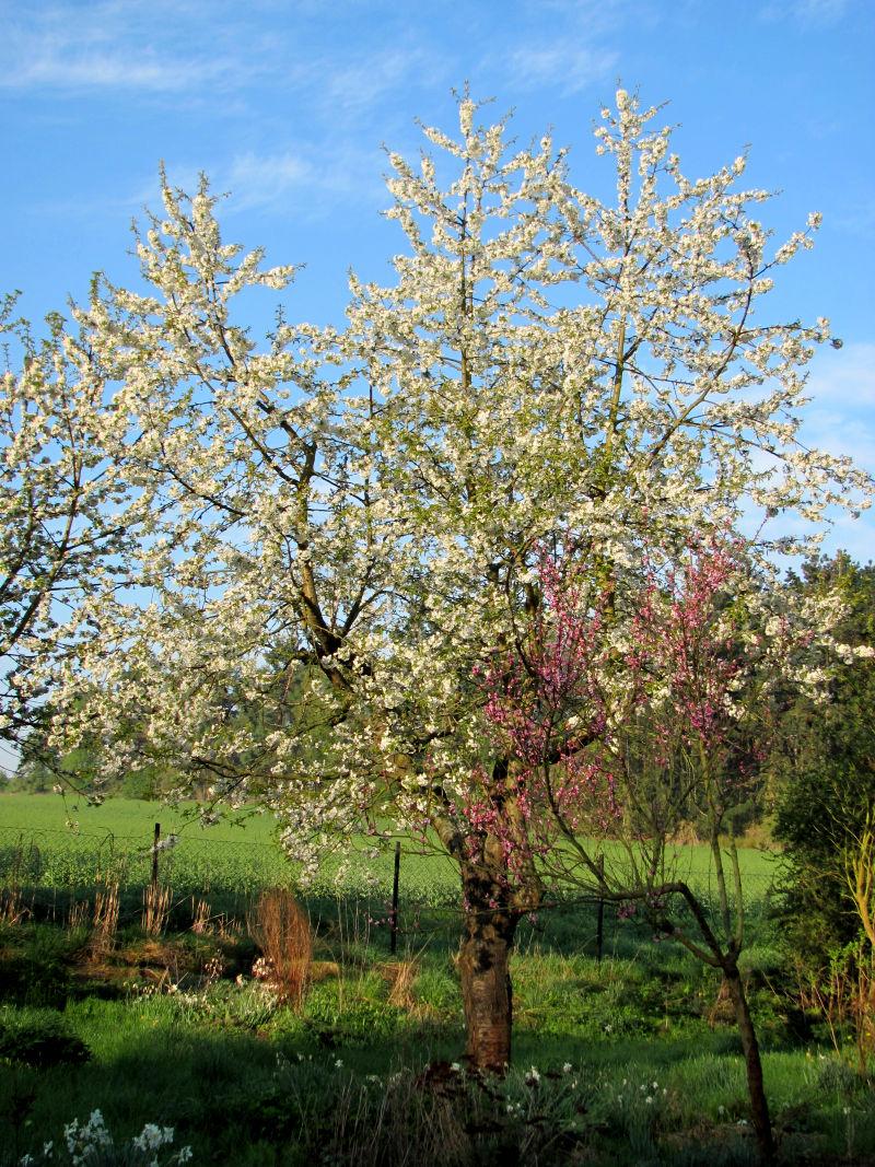 Obstbäume haben Schäden 2
