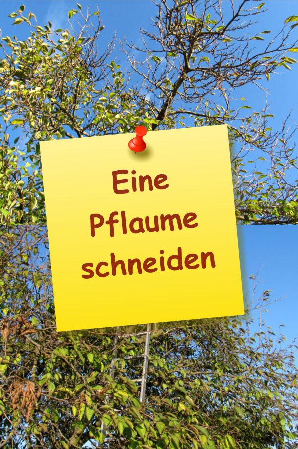 Berühmt Pflaumenbaum zurückschneiden » GartenBob.de der Garten Ratgeber &UV_25