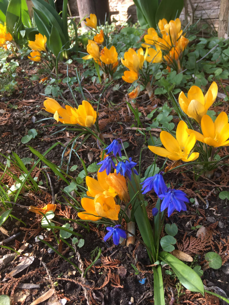 Blumen Frühling Garten