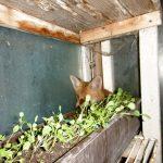 Der Fuchs im Garten 1