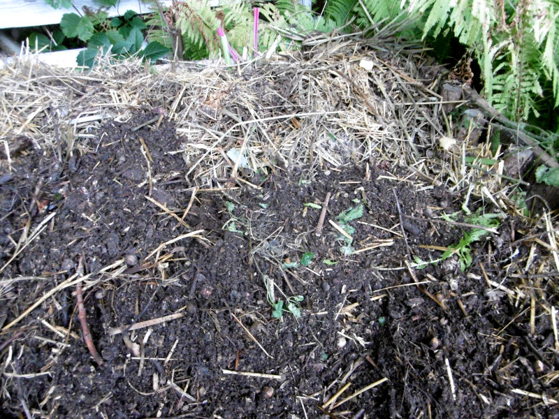 komposterde-aufgearbeitet-4