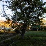 wie-faellt-man-einen-obstbaum-1