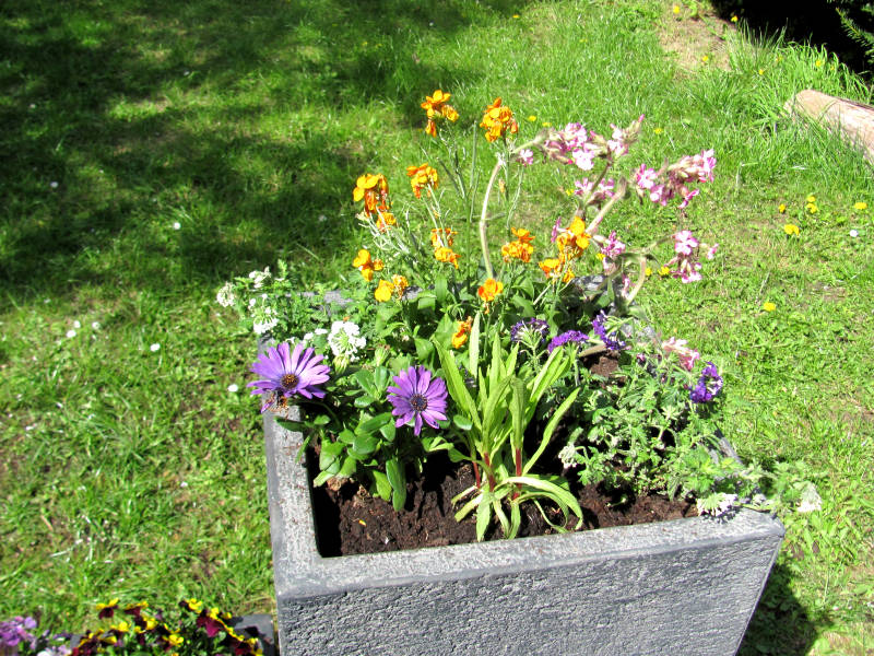 Pflanzkübel Bepflanzung