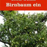 Blätter Birnbaum