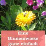 Anlegen Blumenwiese