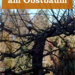 Wildwuchs am Obstbaum