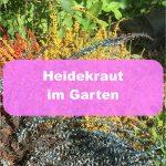 Heidekraut Garten