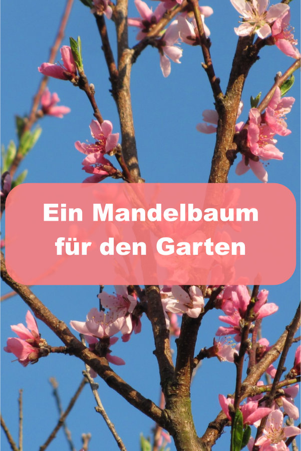 Mandelbaum für Garten