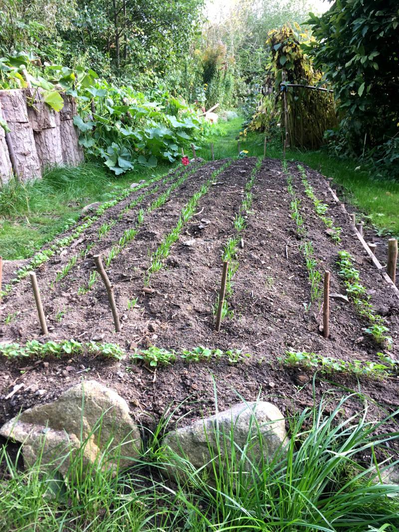 Gartenbeet bepflanzt