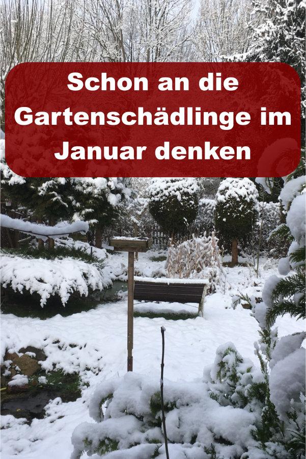 Gartenschädlinge im Januar