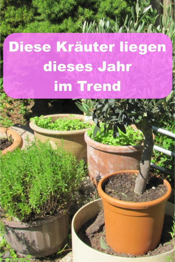Kräuter-Küche: Diese Gewürze und Kräuter liegen im Trend » GartenBob ...