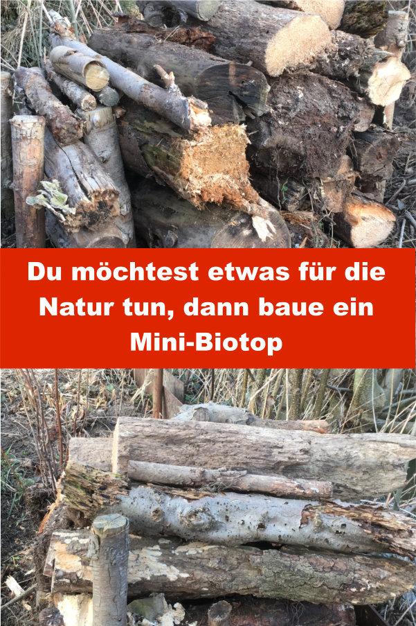 Mini Biotop bauen
