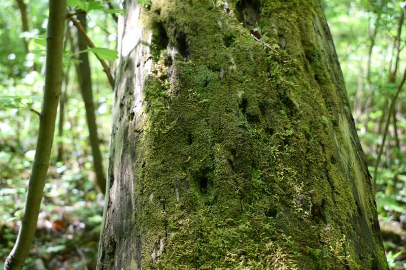 Pilze,Flechten und Moose voneinander unterscheiden
