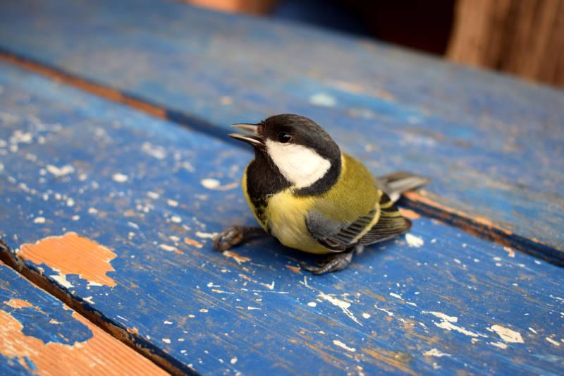 Vogel auf Tisch