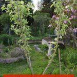 Obstbaum wächst nicht