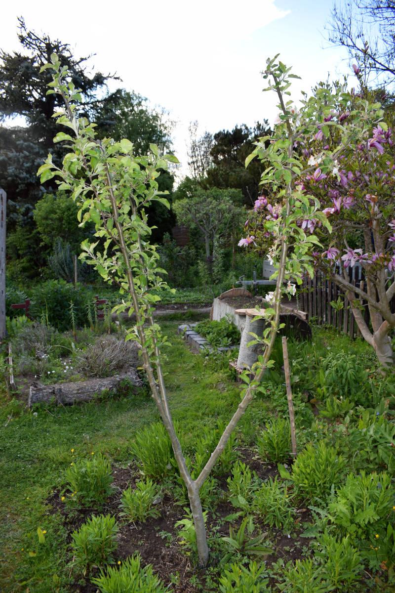 gepflanzter Baum wächst nicht