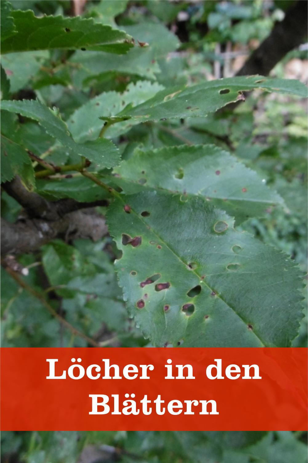 Löcher in Blättern