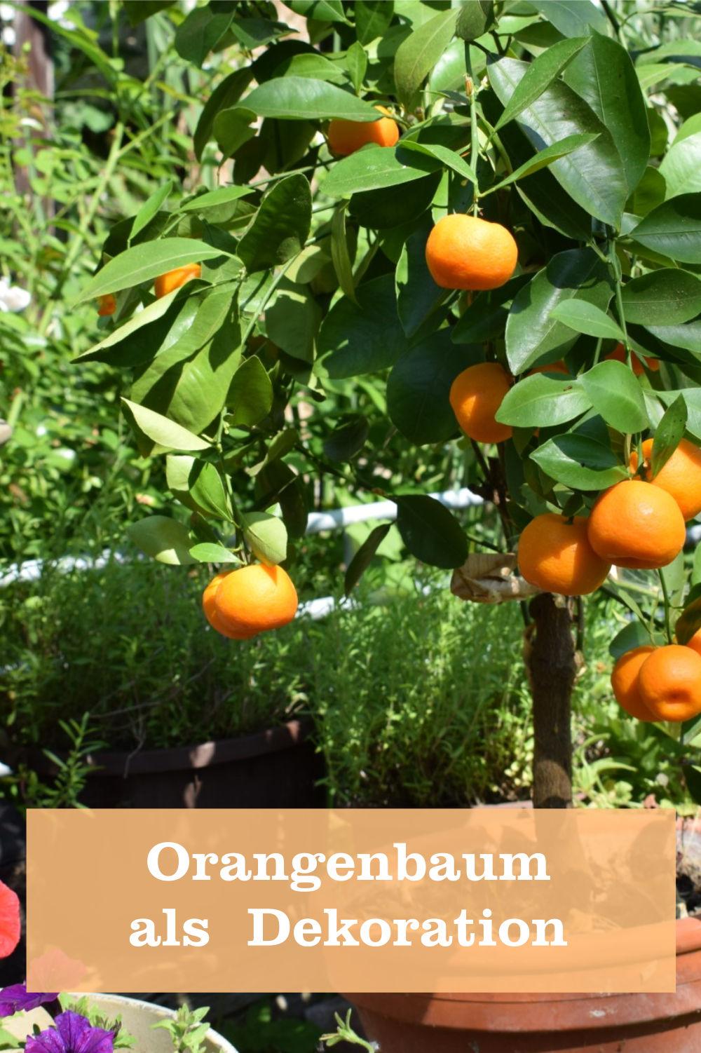 Orangenbaum als Dekoration