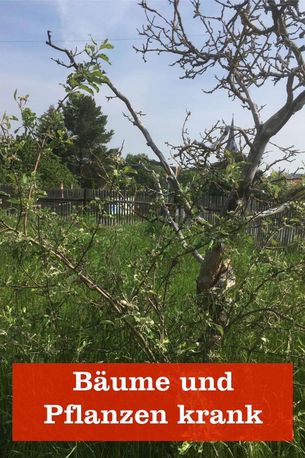 Bäume und Pflanzen krank