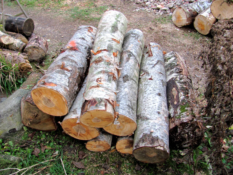 Birke als Brennholz
