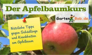 Gartenkurs Apfelbaum