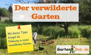 Gartenkurs verwilderter Garten