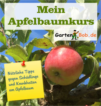 Kurs Apfelbaum