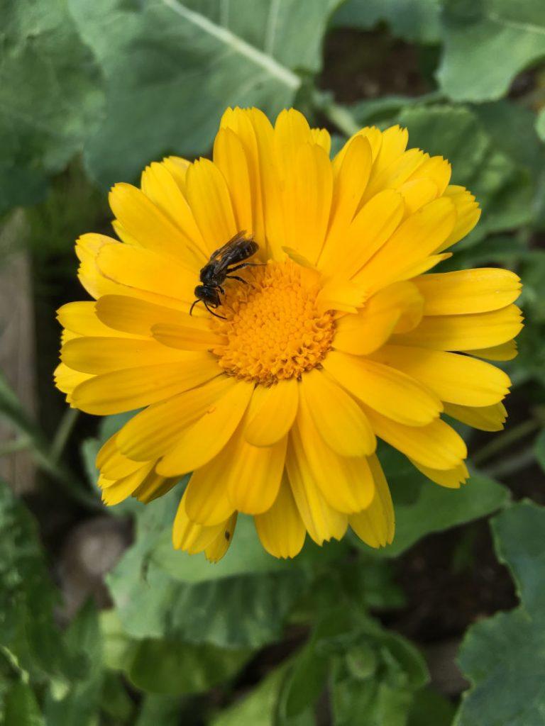 Gelbe Blume Balkon