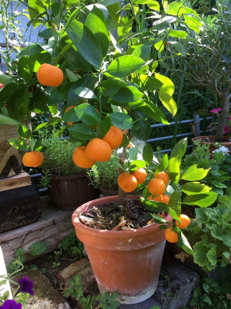 Orange Balkon