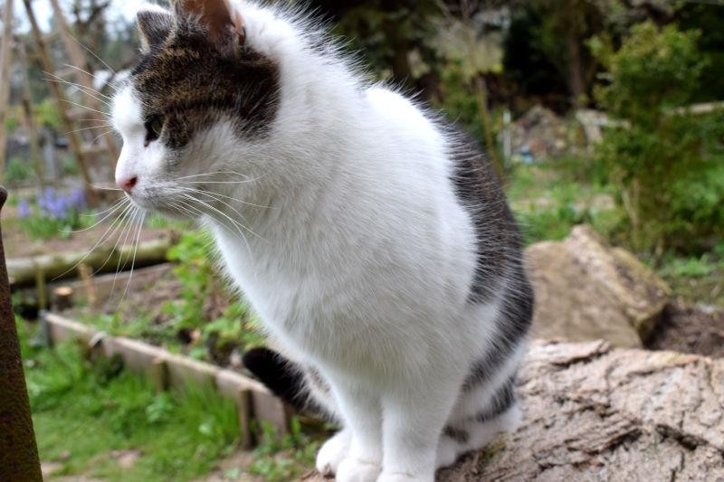 Katzen auf dem Land