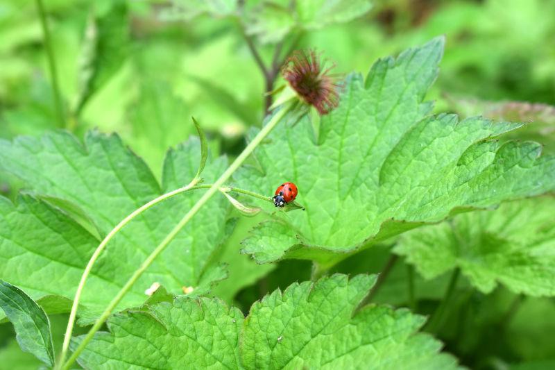 Nützling im Garten