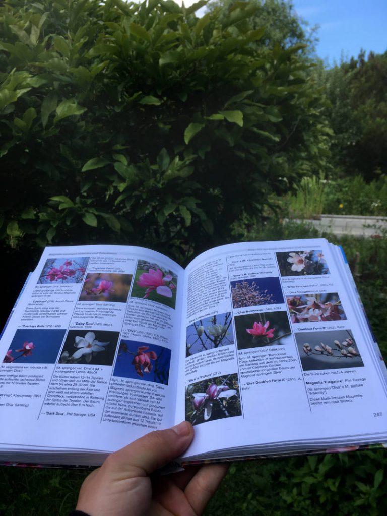 Buch Magnolien