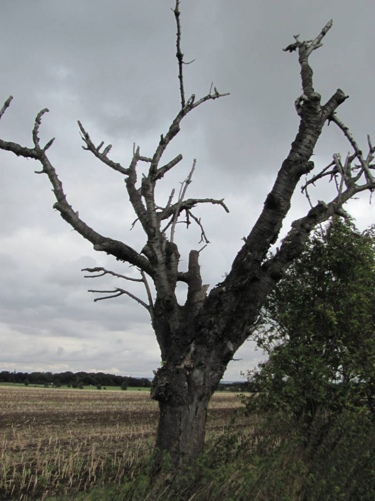 Bäume keine Blätter
